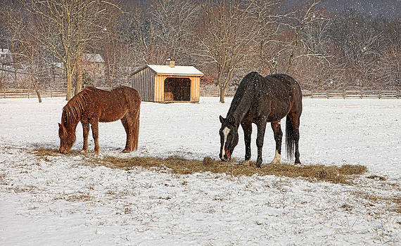 Meadow Breeze Farm Winter 2014 by Pat Abbott