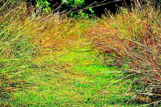 Meadow Entrance by Leah Reynolds