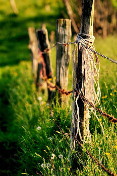 Mary Frances - Meadow Fence