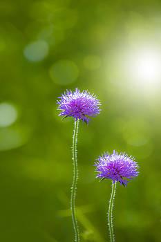 Meadow flower by Martin Joyful