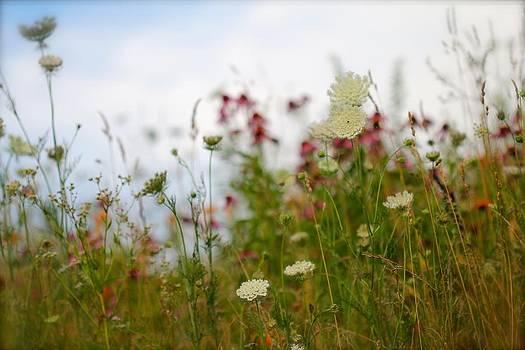 Meadow Flowers by Tracy Male