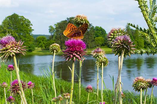 Meadow Fritillary Butterfly  by Jens Larsen