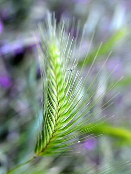 Bishopston Fine Art - Meadow Grass