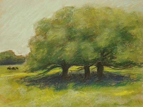 Meadow Oaks by Tricia Mcdonald