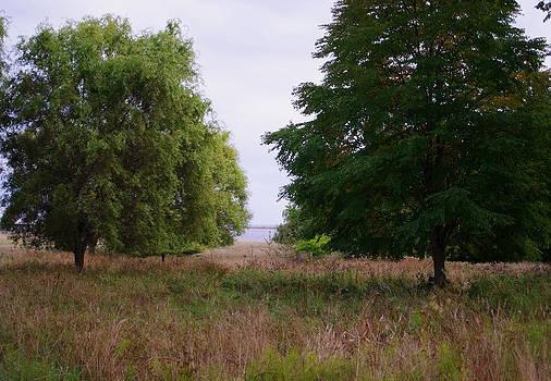 Marilyn Wilson - Meadow on a Foggy Afternoon