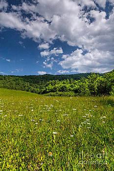 Meadow with wildflowers by Bernd Laeschke