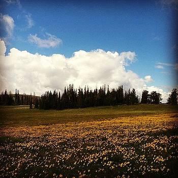 Meadows by Dan Mason