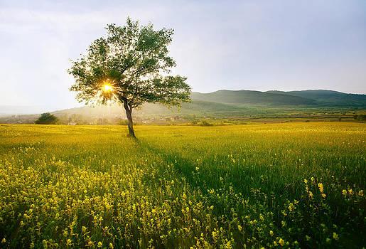 Meadows in sunset  by Svetoslav Sokolov