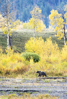 Meandering through Fall by Deby Dixon