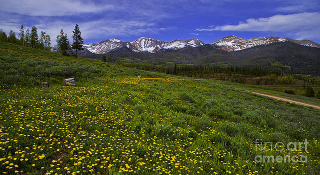 Medicine Bow by Barbara Schultheis