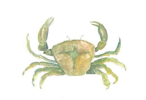Marko Jezernik - Mediterranean Green Crab