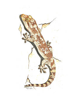 Mediterranean house gecko by Cindy Hitchcock