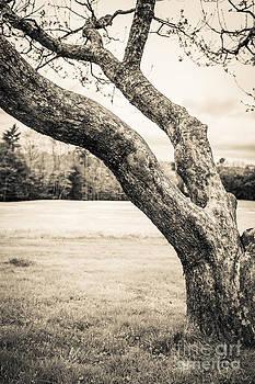 Edward Fielding - Meet me under the old apple tree