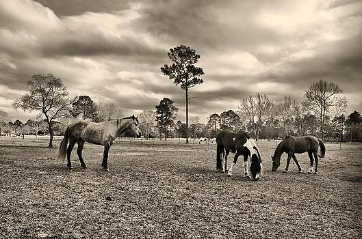 Melancholy Horses by Karsun Designs Photography