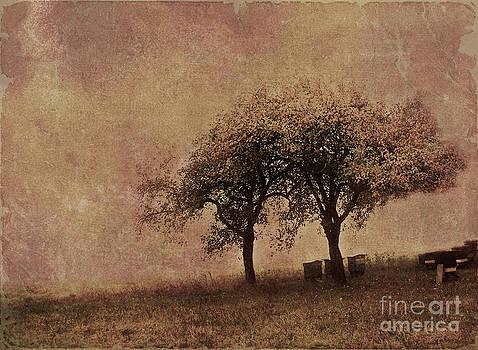 Melancholy of autumn by Monika Pachecka