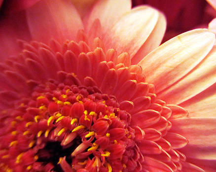 Mellow Pink by Nita Sweeney