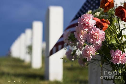 Wayne Moran - Memorial Day Beauty in the Sacrifice