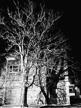 Memorial hall tree  by Dustin Soph