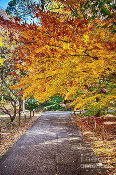 Memories of autumn-2 by Tad Kanazaki