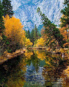 Merced River and Leaning Pine by Terry Garvin