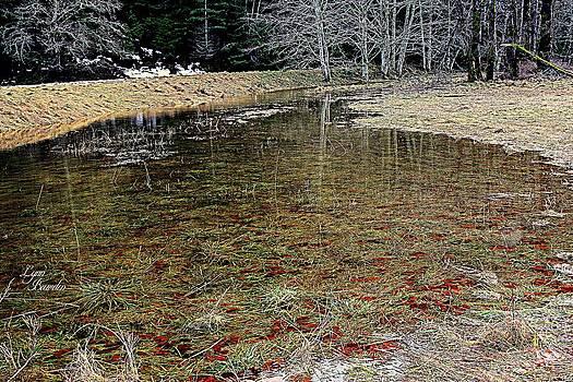 Lynn Bawden - Merced River