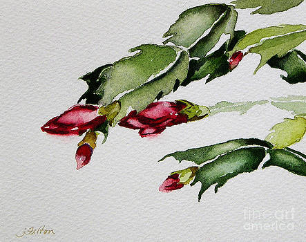 Merry Christmas Cactus 2013 by Julianne Felton