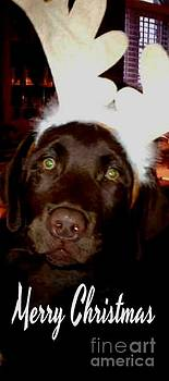 Gail Matthews - Merry Christmas Chocolate Labrador