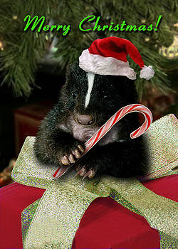 Jeanette K - Merry Christmas Skunk