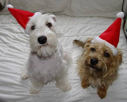 Merry Woofmas by Heather Gordon