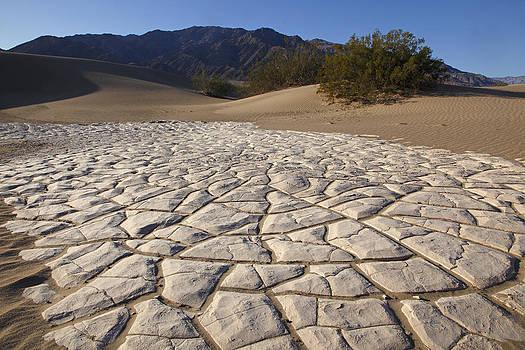 Susan Rovira - Mesquite Dune Mosaic