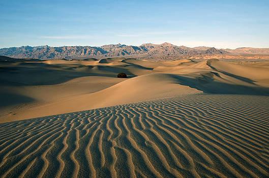 Mesquite Dunes by Darren Bradley
