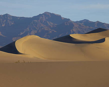 Mesquite Dunes by Neal Martin