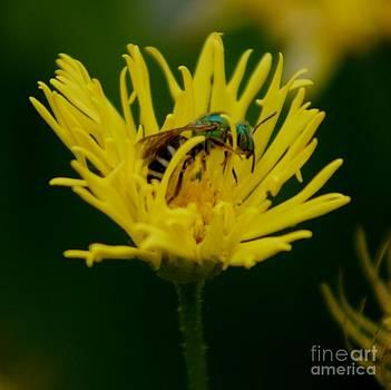 Gail Matthews - Metallic green-bee-eater