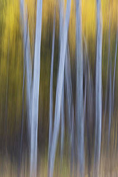 Methow Aspen by Ross Murphy