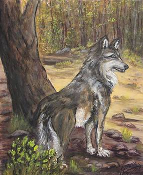 Mexican Gray Wolf by Caroline Owen-Doar