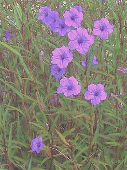 Mexican Petunias by Lois Bailey