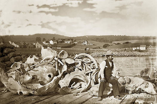 California Views Mr Pat Hathaway Archives - Michael Noon sitting on a  Pile of whale bones Monterey Wharf  circa 1896