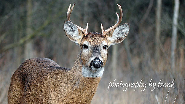 Michigan 8 pointer by Frank Sciberras