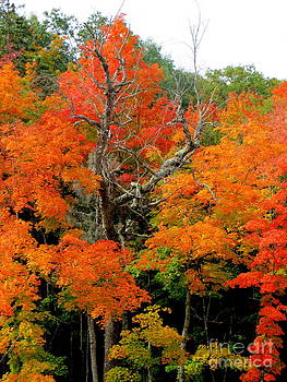 Michigan Autumn Beauty by Jaunine Roberts