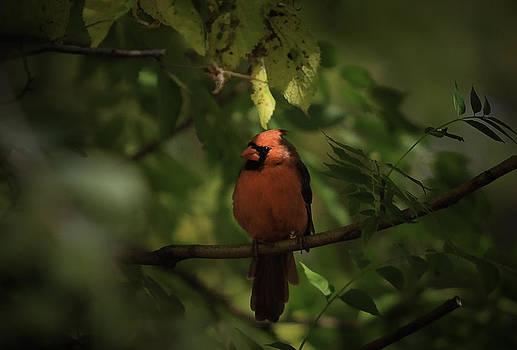 Michigan Cardinal by Mike Lanzetta