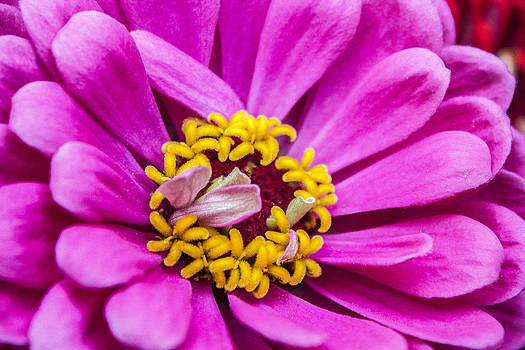 Michigan flower 1 by Carl Christensen