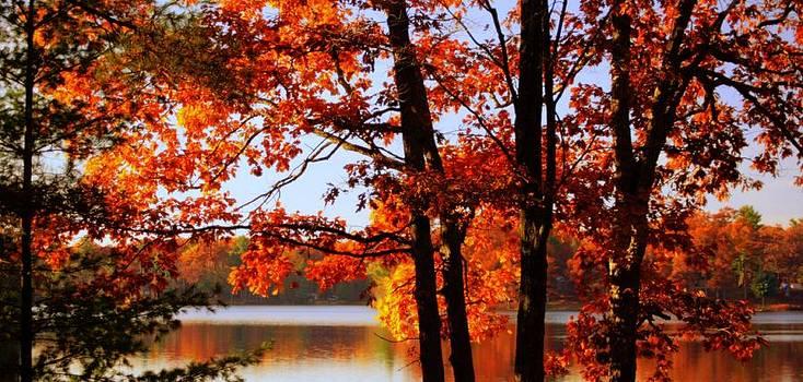 Rosemarie E Seppala - Michigan In A Blaze Of Color At Brookings Lake