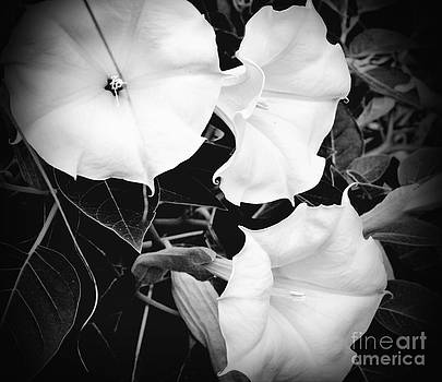 Michigan Moonflowers by Eva Thomas