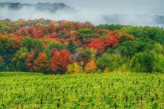 Michigan Wine Country by Thomas Nighswander