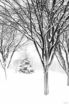 Michigan Winter by Karen Varnas