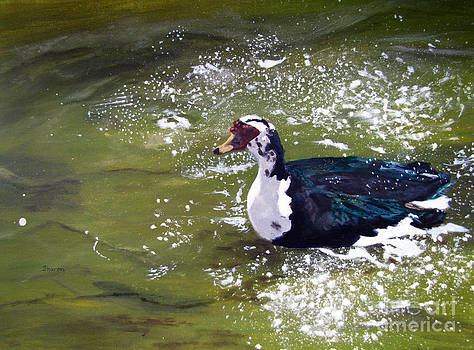 Mid Morning Muscovy by Sharon Burger