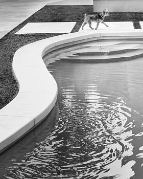 William Dey - MIDCENTURY MADISON Palm Springs Pup