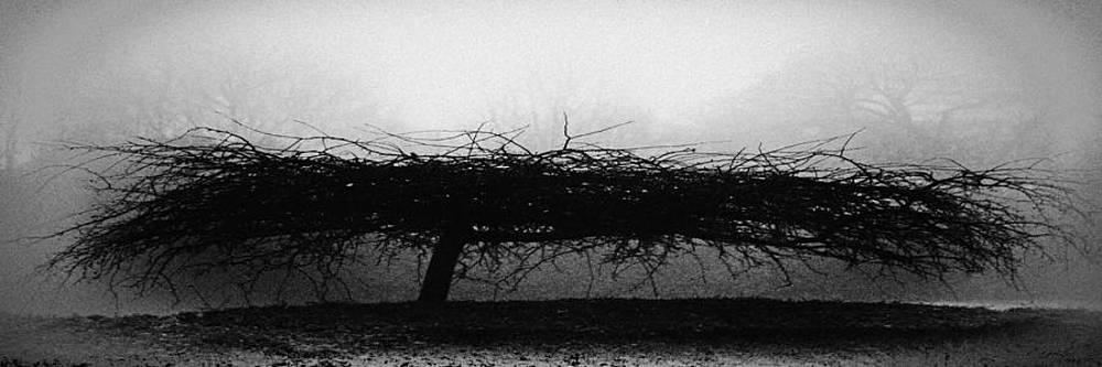TONY GRIDER - MIDDLETHORPE TREE IN FOG BW Panorama