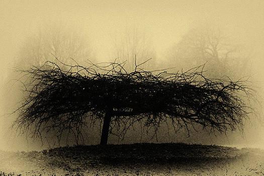 TONY GRIDER - MIDDLETHORPE TREE IN FOG ANTIQUE YELLOW