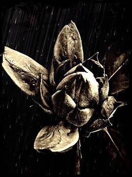 Midnight Bloom  by Natalya Karavay